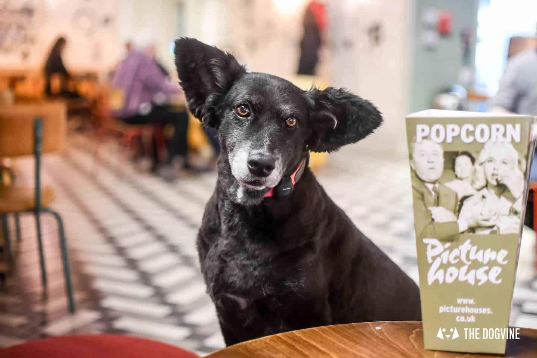 Dog-friendly Cinema Greenwich Picturehouse Animals