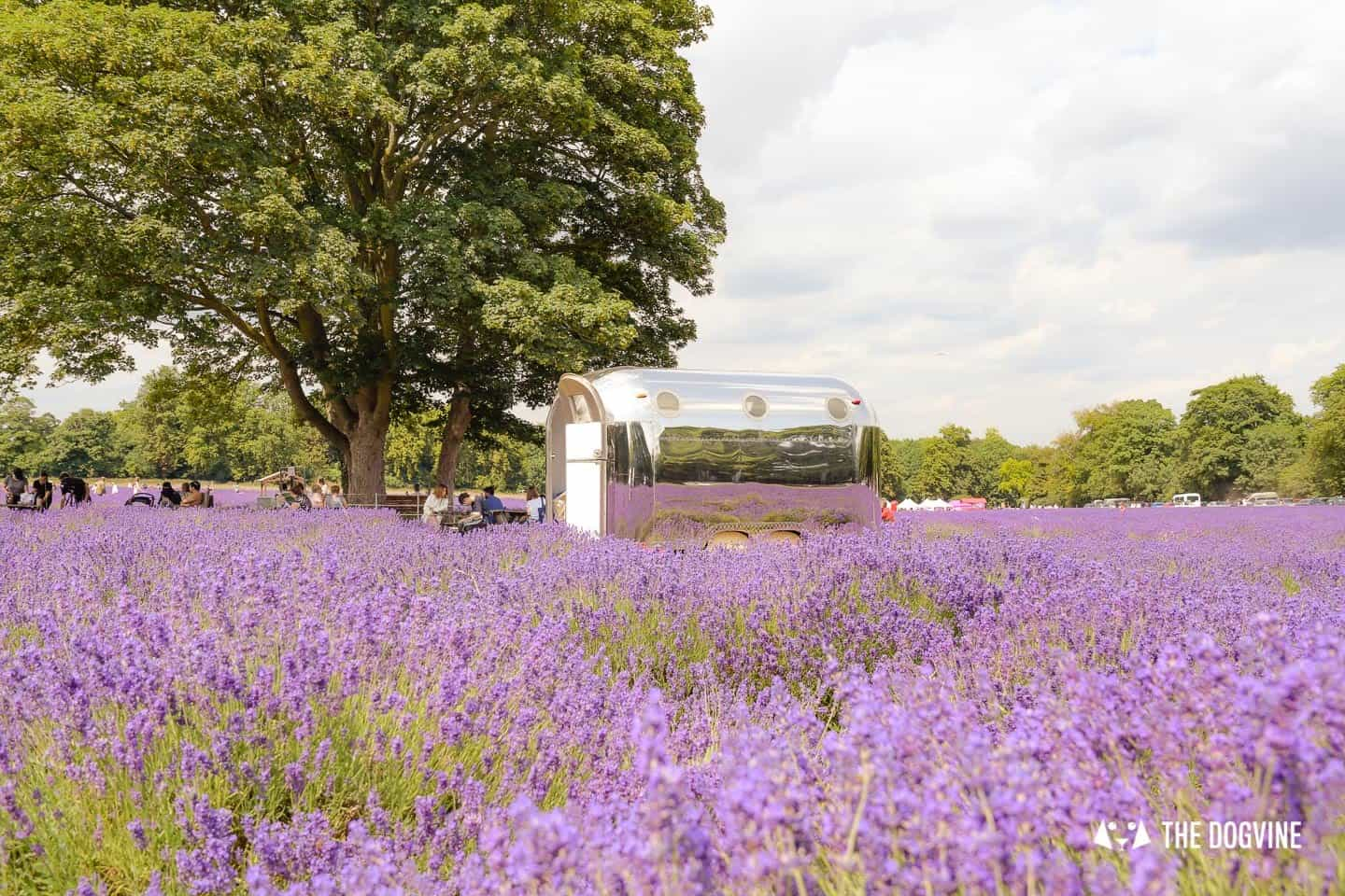 Dog-friendly Mayfield Lavender Farm - The Airstream Café