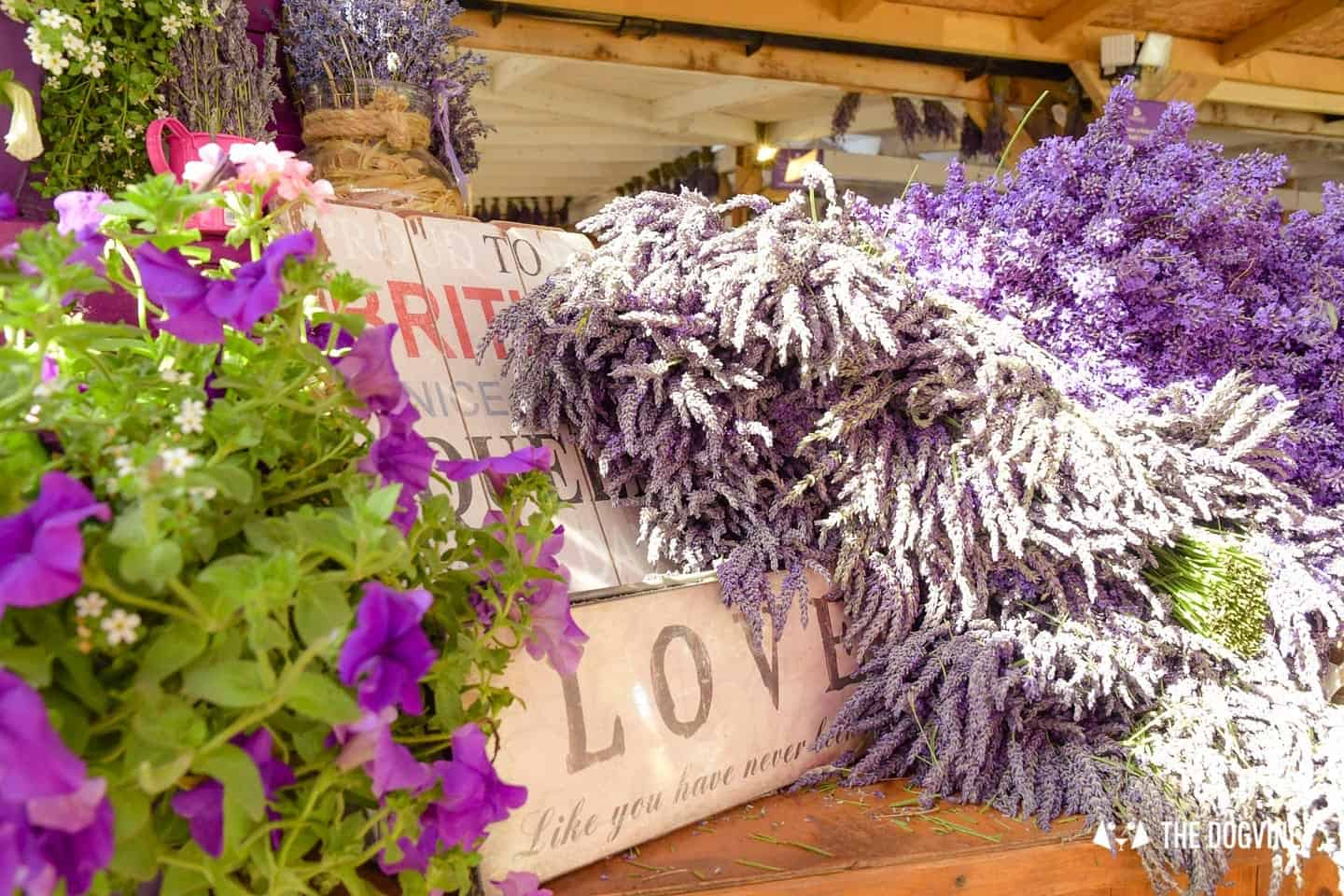 Lavender in the Mayfield Lavender Farm Gift Shop