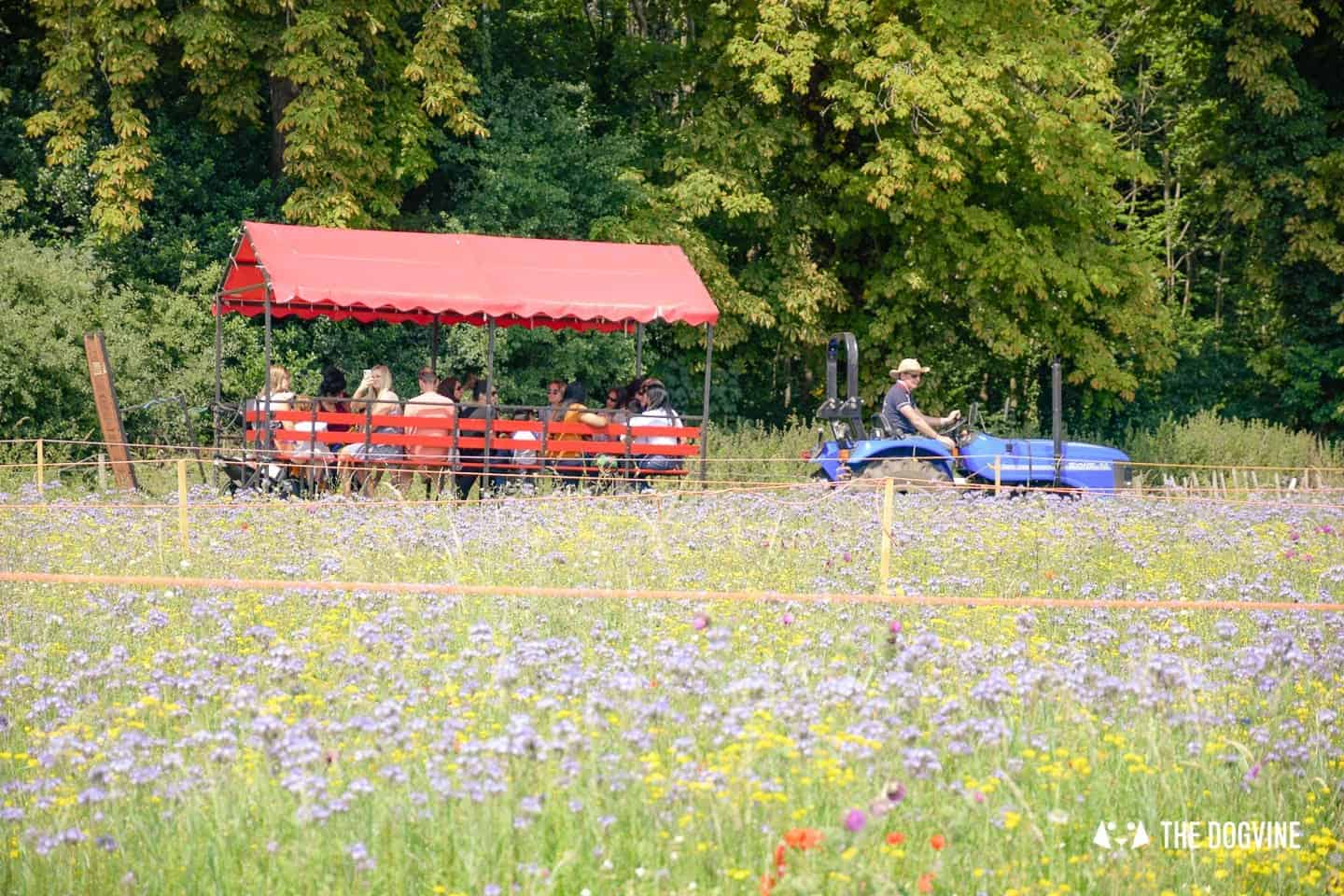 Dog-friendly Mayfield Lavender Farm - Tractor Tour