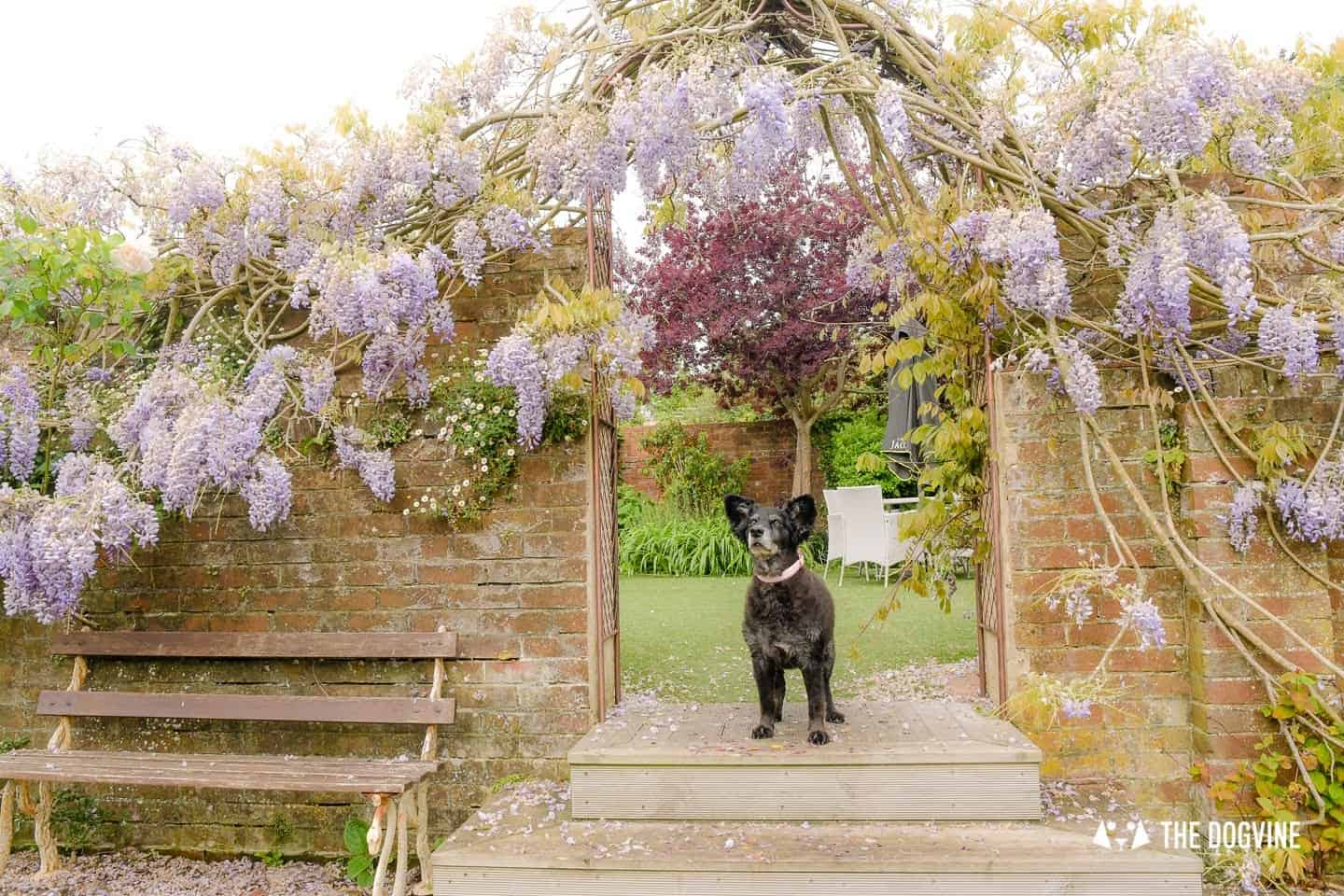 Dog-friendly Stanwell House Hotel Lymington 14