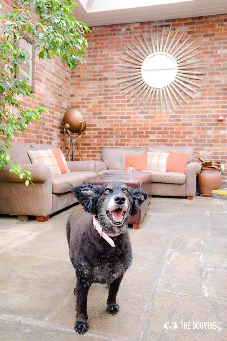 Dog-friendly Stanwell House Hotel Lymington 23
