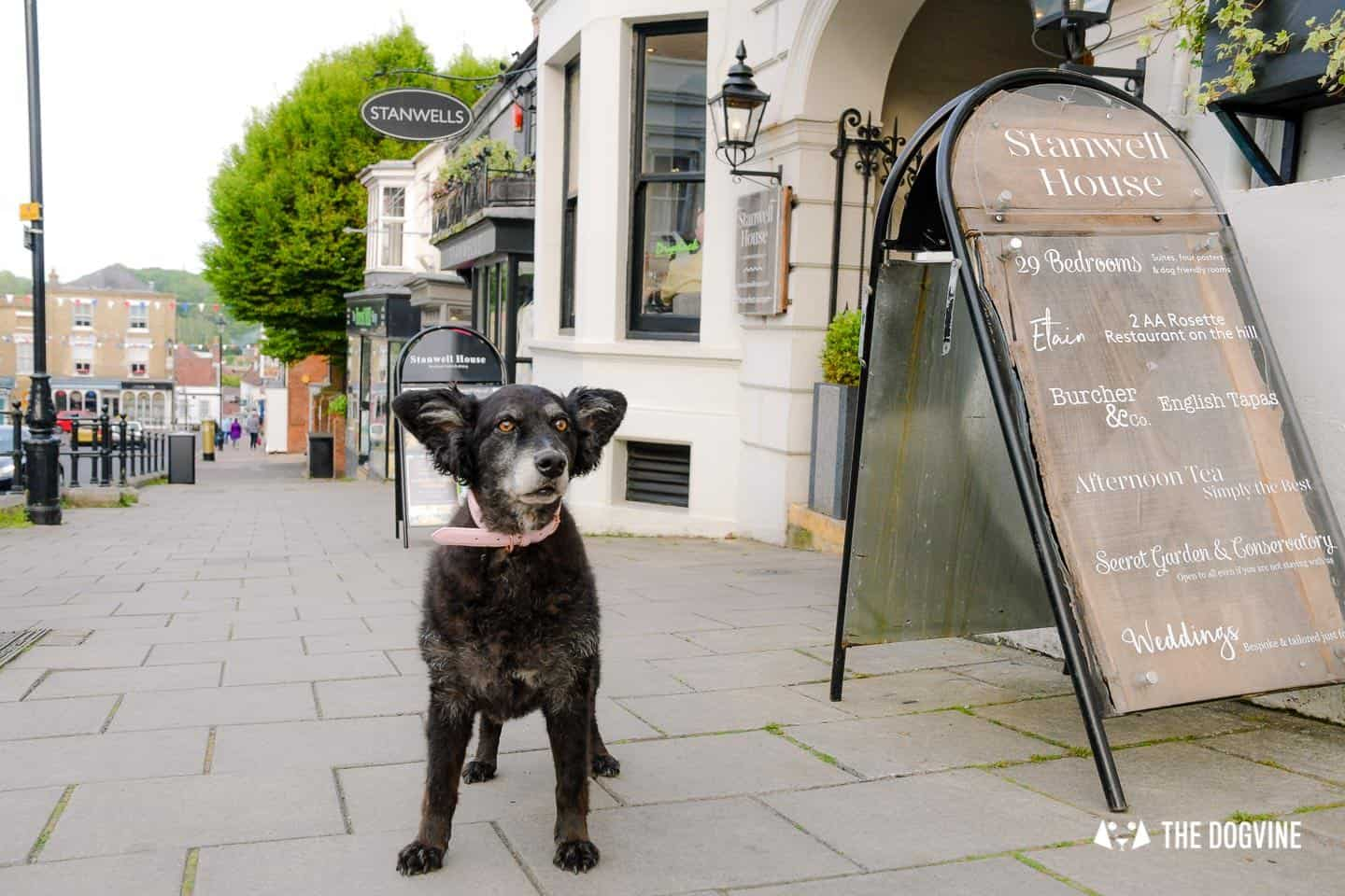 Dog-friendly Stanwell House Hotel Lymington 24
