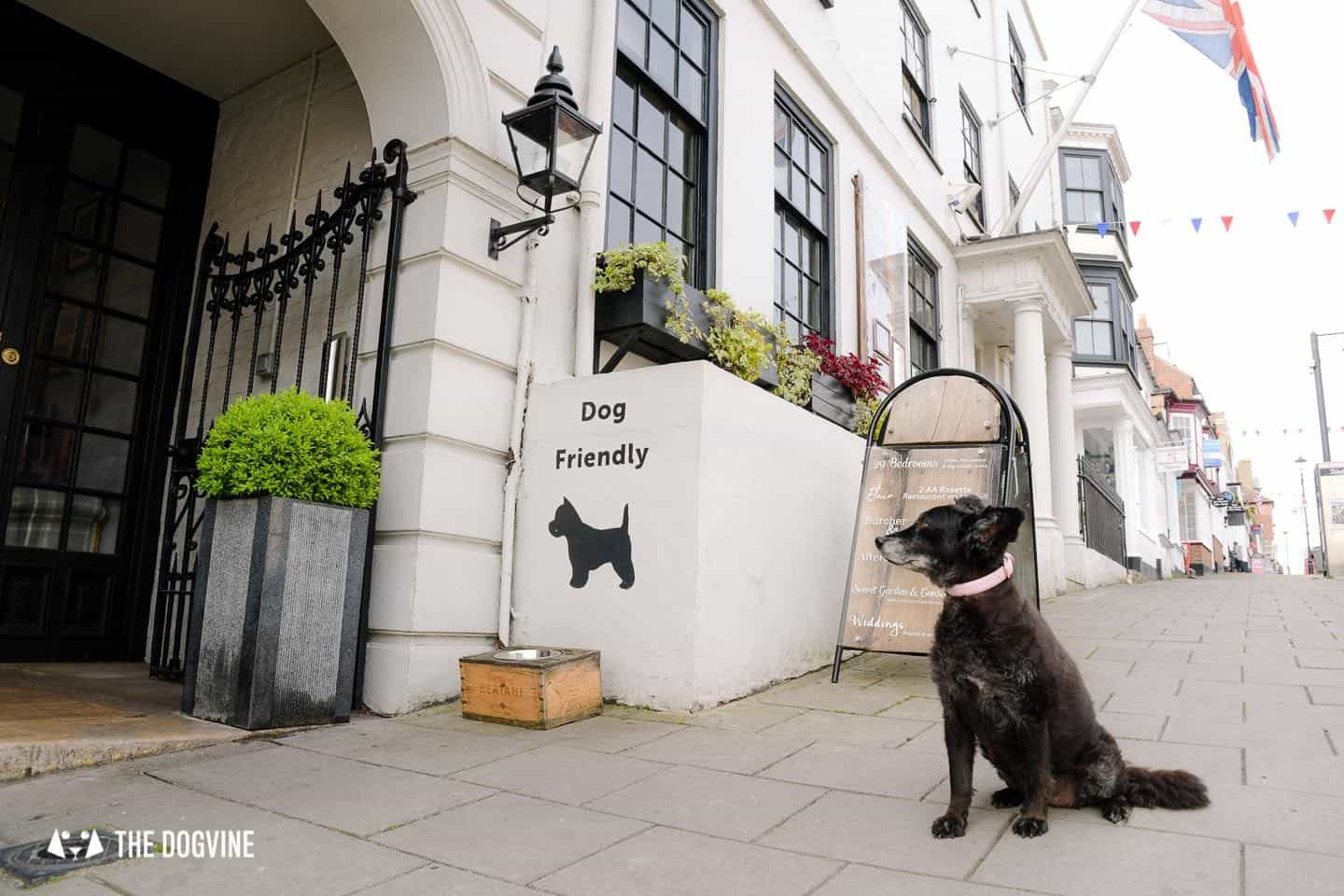 Dog-friendly Stanwell House Hotel Lymington 36