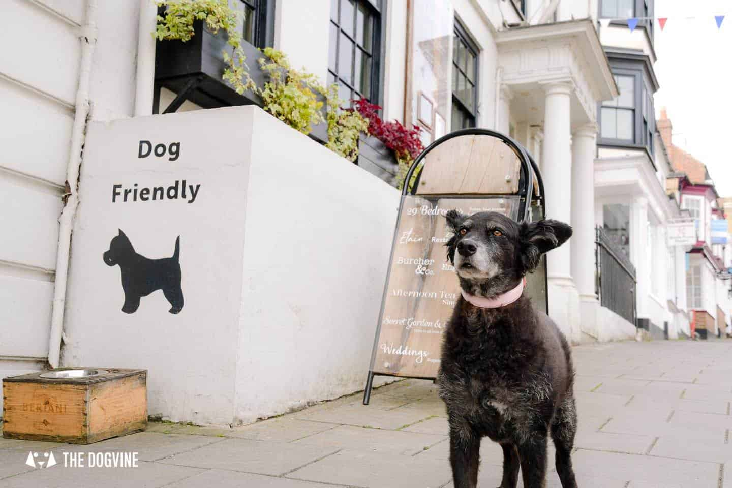 Dog-friendly Stanwell House Hotel Lymington 38