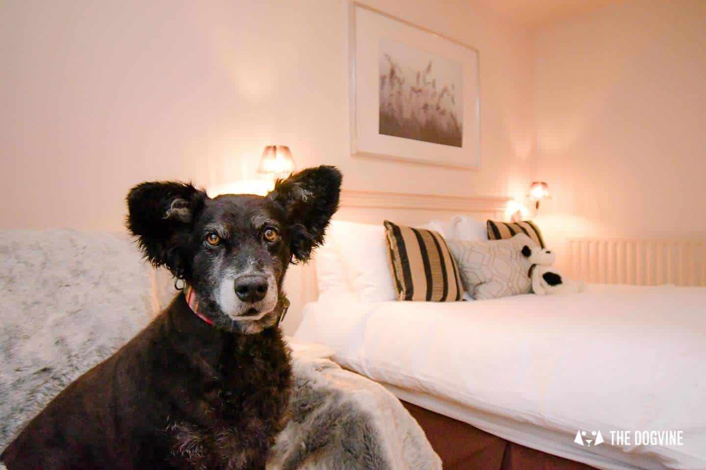 Dog-friendly Stanwell House Hotel Lymington 4