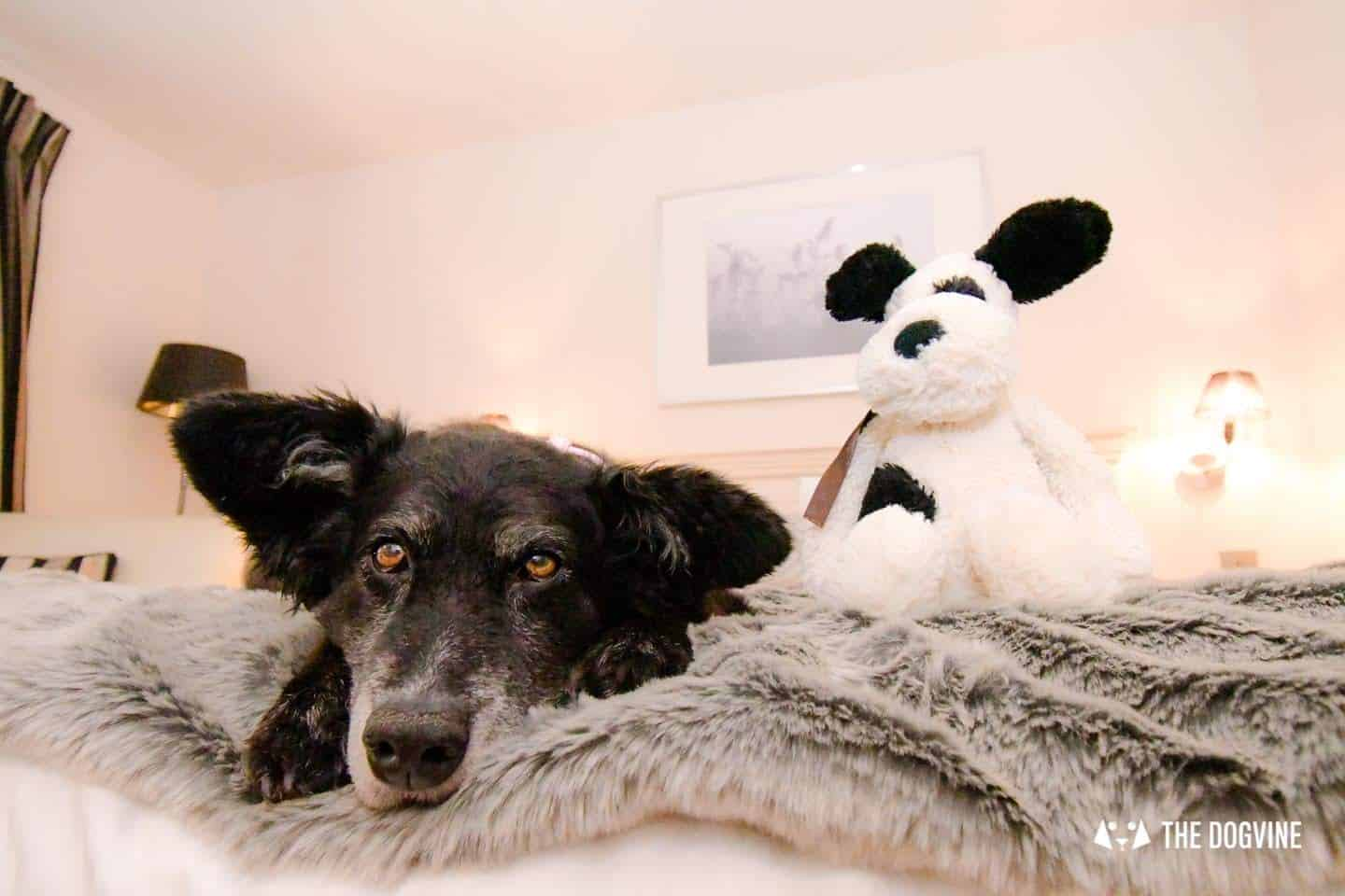 Dog-friendly Stanwell House Hotel Lymington 8