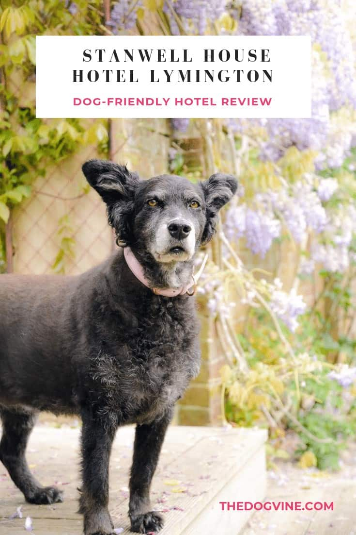 Dog-friendly Stanwell House Hotel Lymington Review