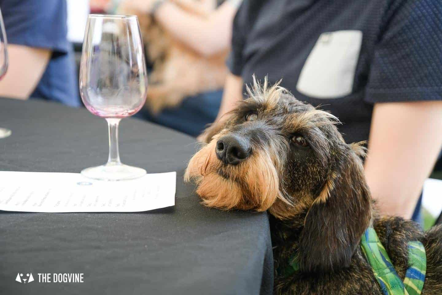 Dog-friendly Wine Tasting August Wine and Canine