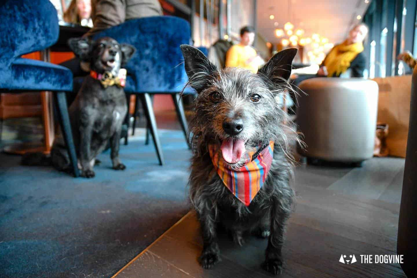 London Dog Events and Things to Do August 2019 - Brunches, Cafes & Socials