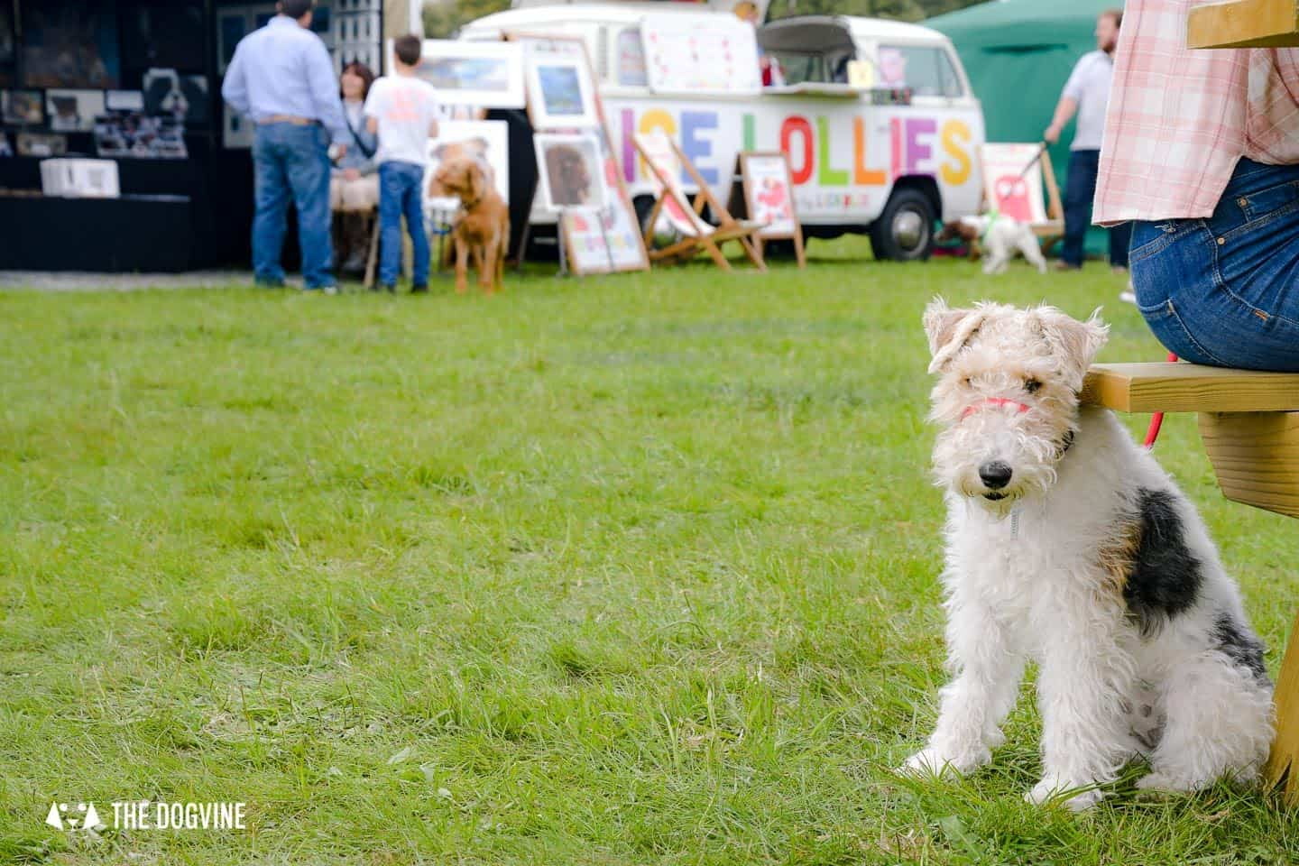London Dog Events and Things to Do August 2019 - Other Events & Festivals