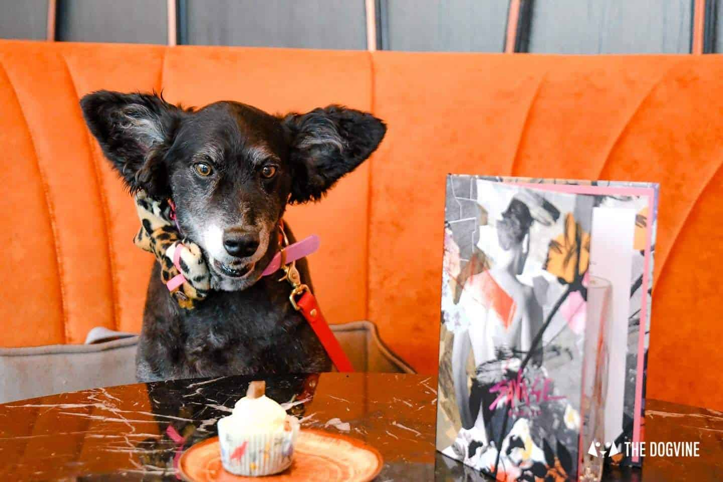 London Dog Events and Things to Do July 2019 - Brunches and Socials