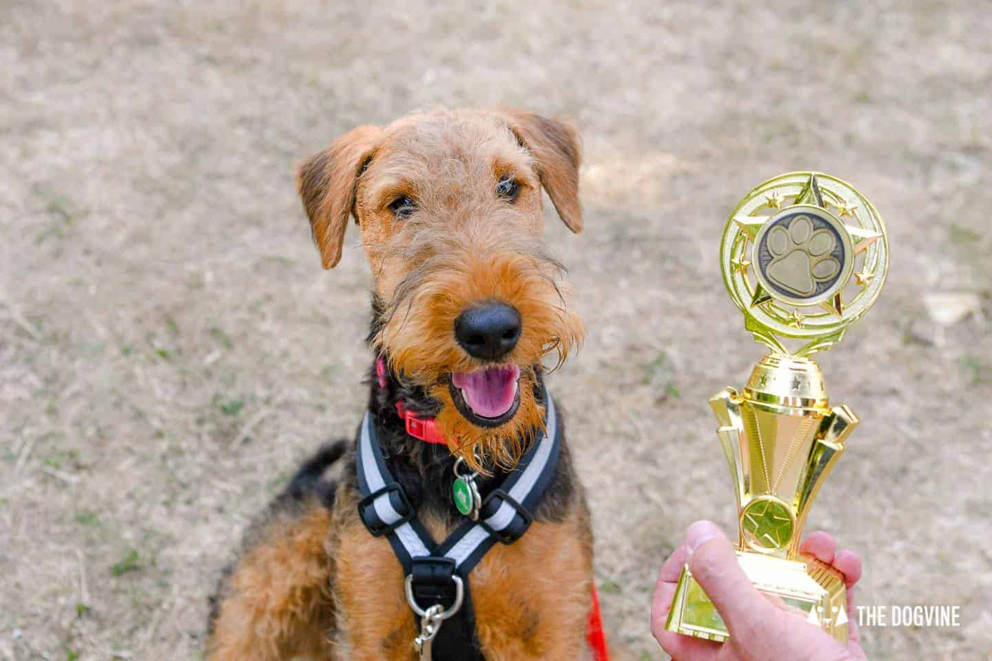 London Dog Events and Things to Do July 2019- Canary Woof Dog Show Winner