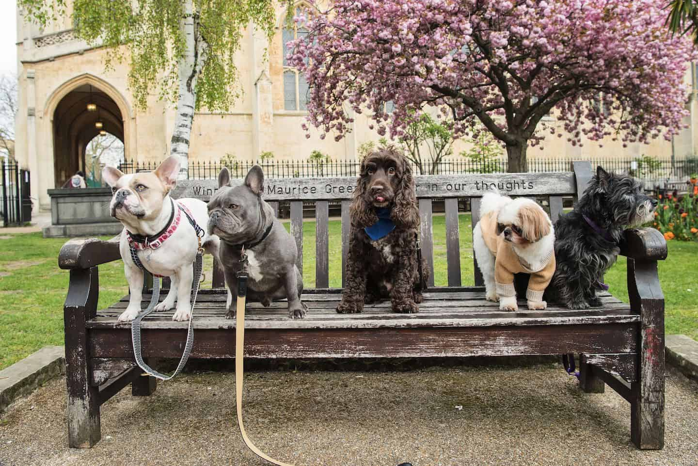 London Dog Events and Things to Do July 2019 - Walks and Meetups