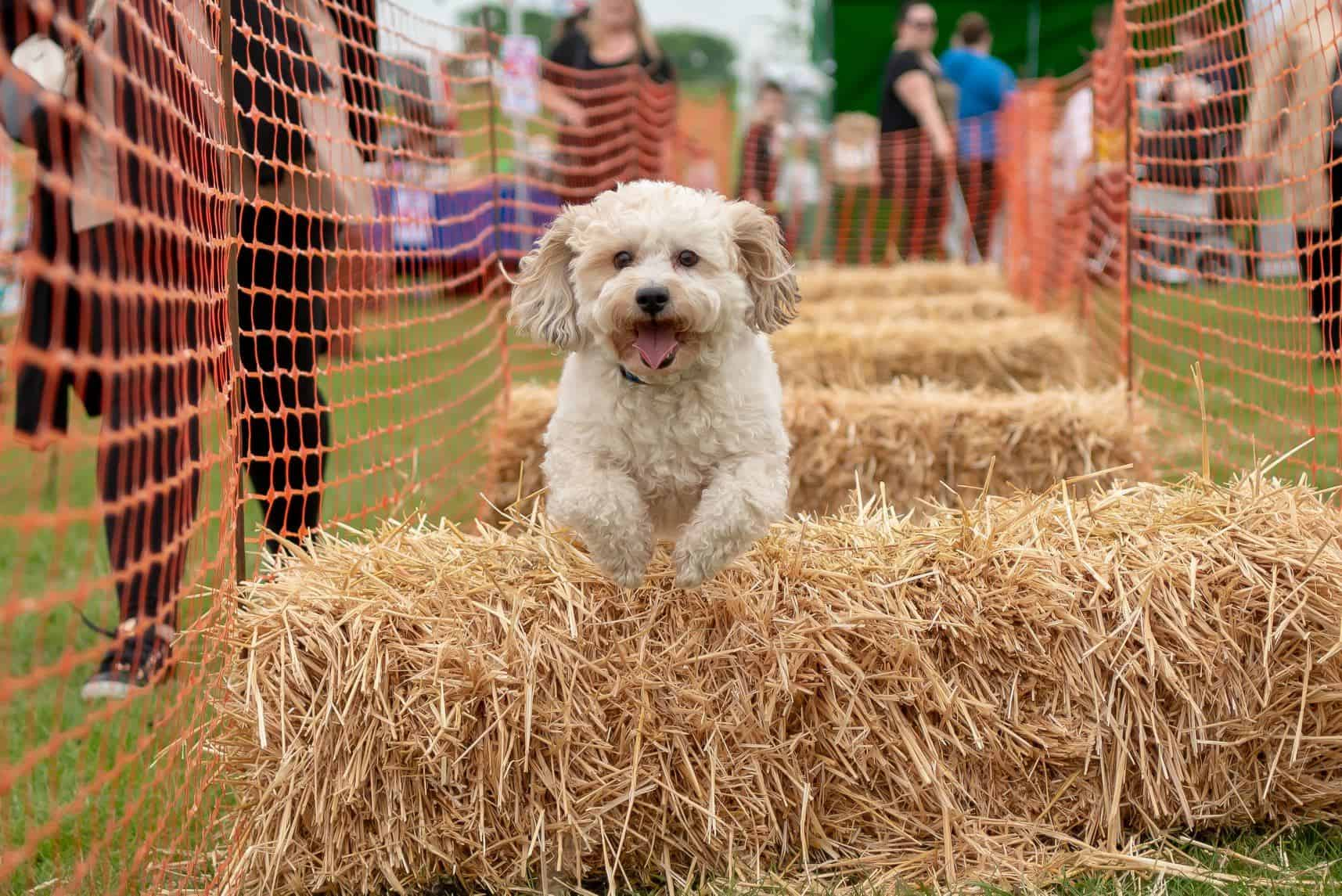 Maven Vets Dog Show 2019 Morden Family Fun Day