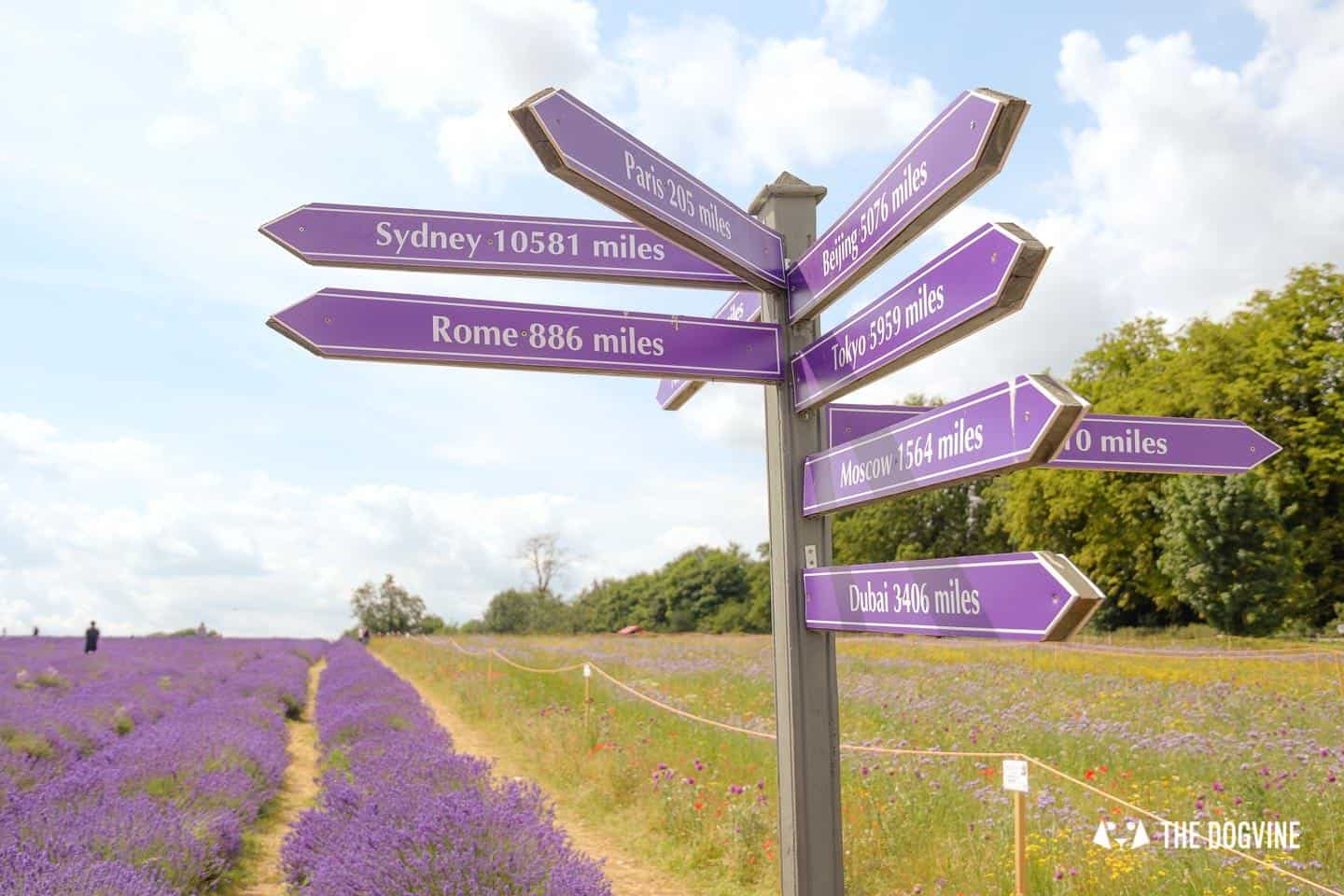 Mayfield Lavender Farm Signpost