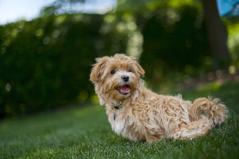 Newham Dog Community Meetup July