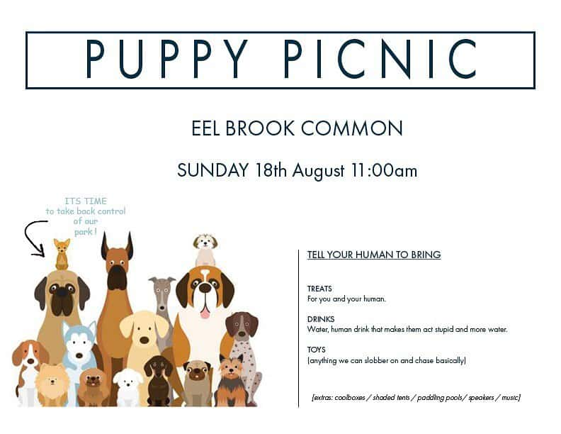 Puppy Picnic on Eel Brook Common
