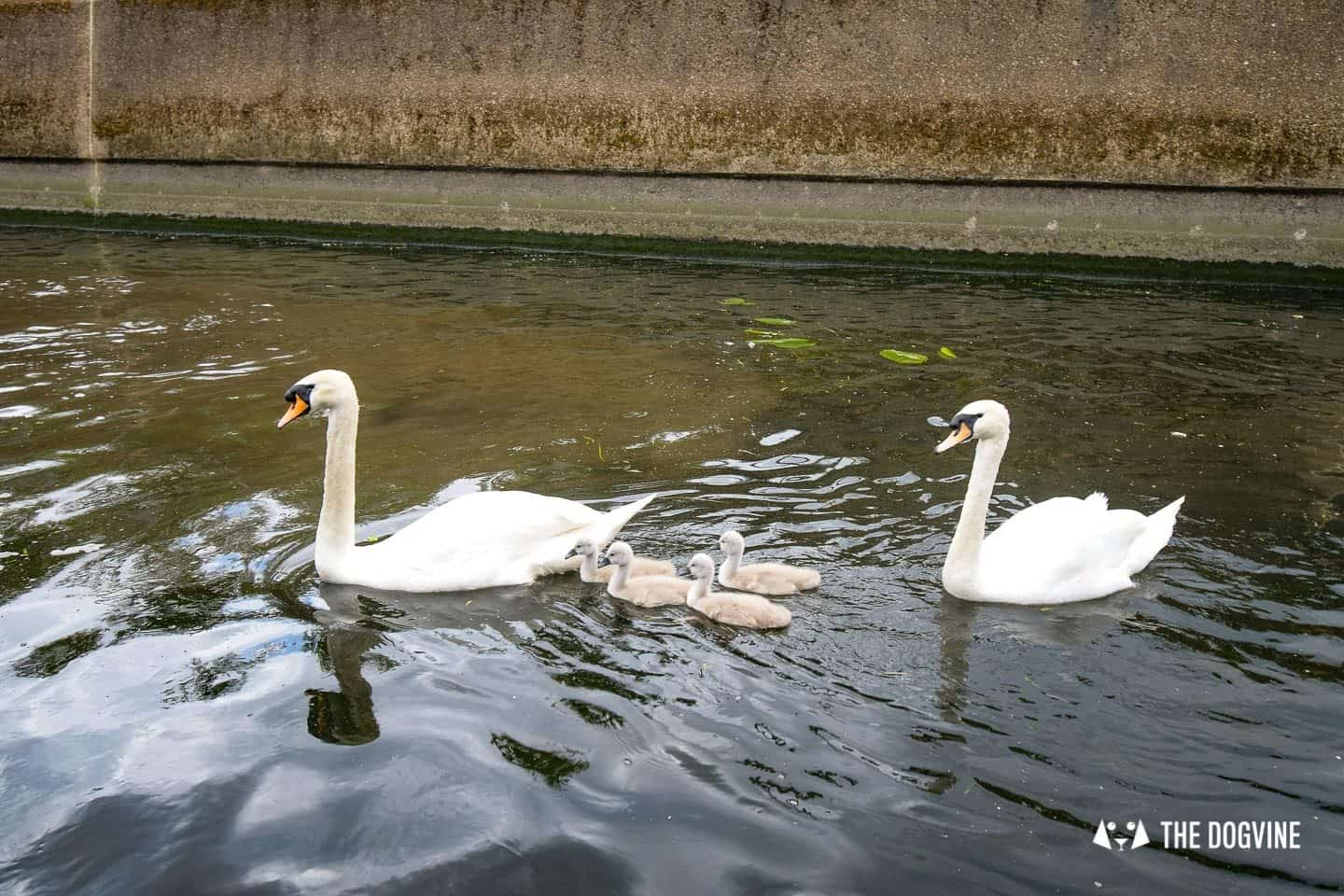 Queen Elizabeth Olympic Park Dog-friendly Boat Tours London - Lee and Stort 15