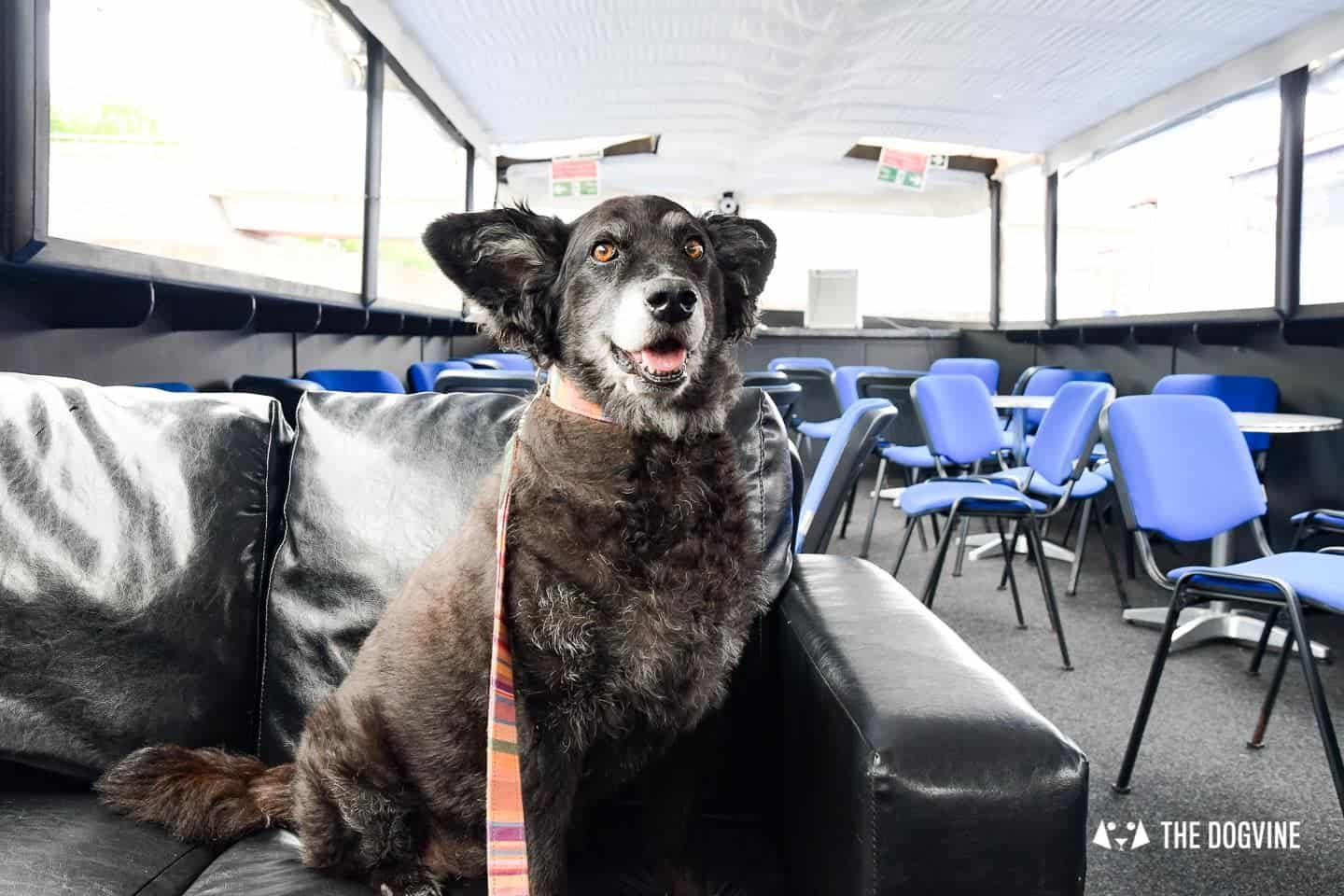 Queen Elizabeth Olympic Park Dog-friendly Boat Tours London - Lee and Stort 17