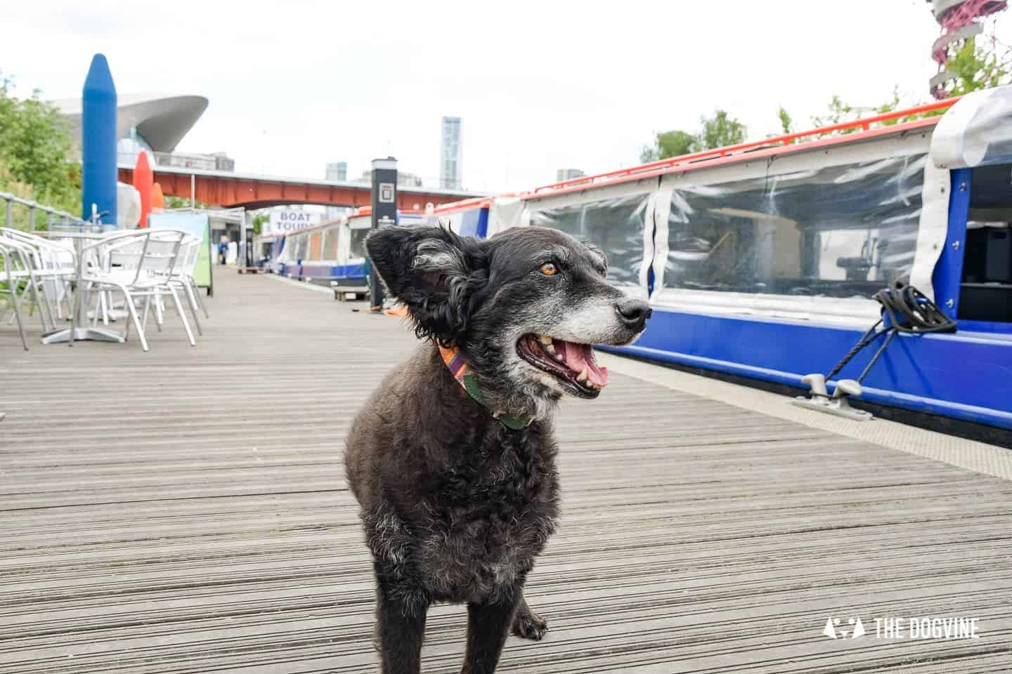 Queen Elizabeth Olympic Park Dog-friendly Boat Tours London - Lee and Stort 19