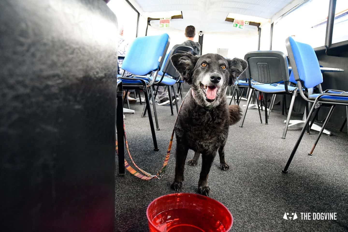 Queen Elizabeth Olympic Park Dog-friendly Boat Tours London - Lee and Stort 2