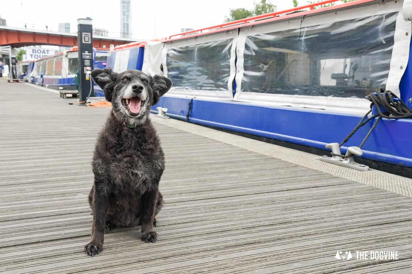 Queen Elizabeth Olympic Park Dog-friendly Boat Tours London - Lee and Stort 21