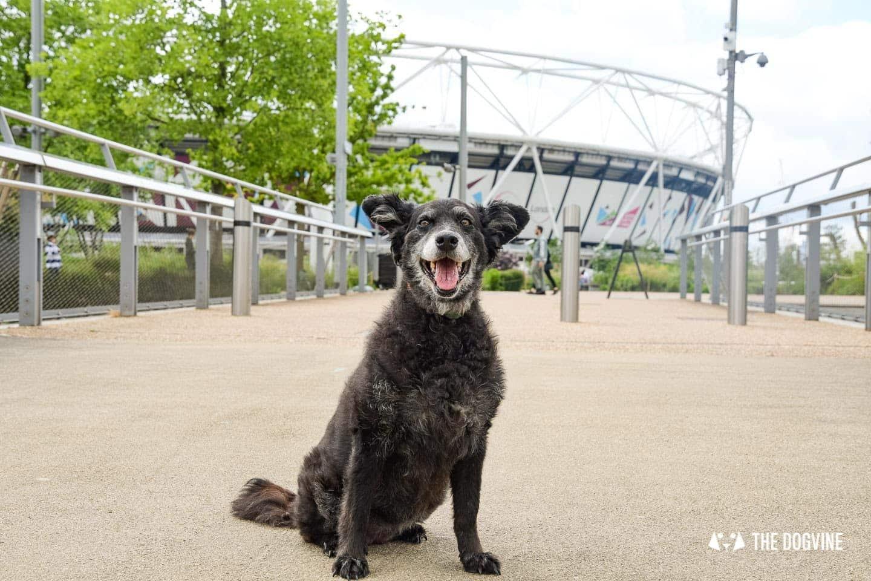 Queen Elizabeth Olympic Park London 2