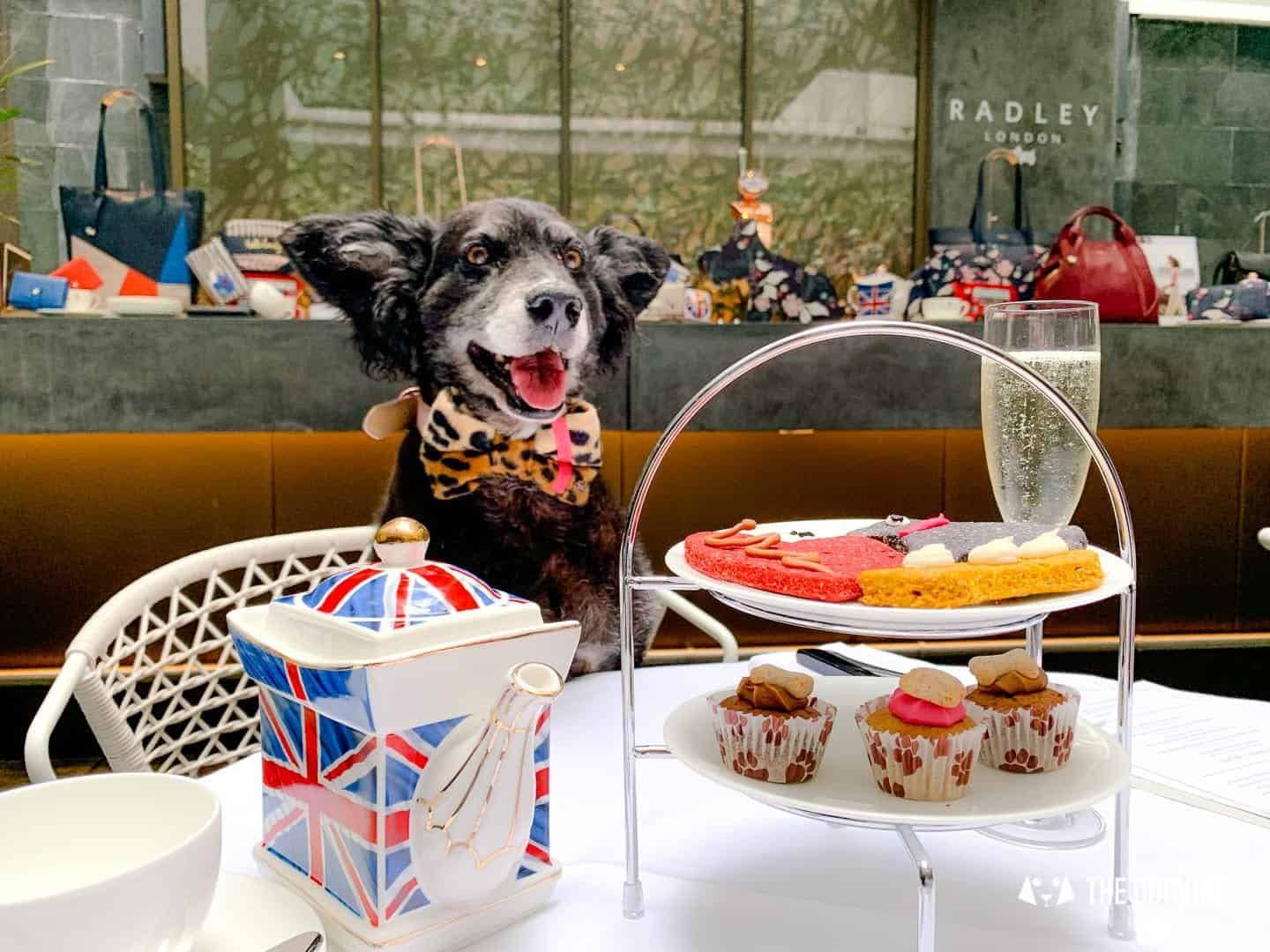 The Radley x South Place Hotel Dog-friendly Afternoon Tea