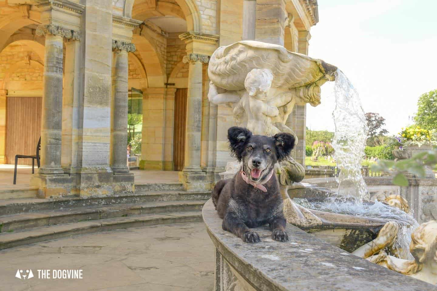 8 Reasons To Visit the Stunning Dog-friendly Hever Castle 16