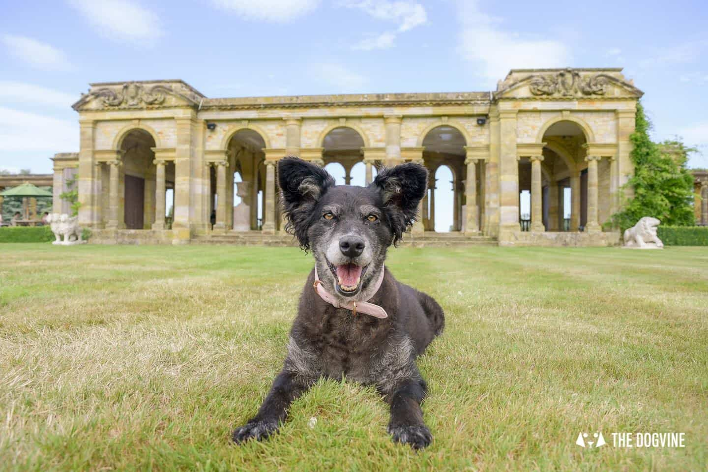 8 Reasons To Visit the Stunning Dog-friendly Hever Castle 17