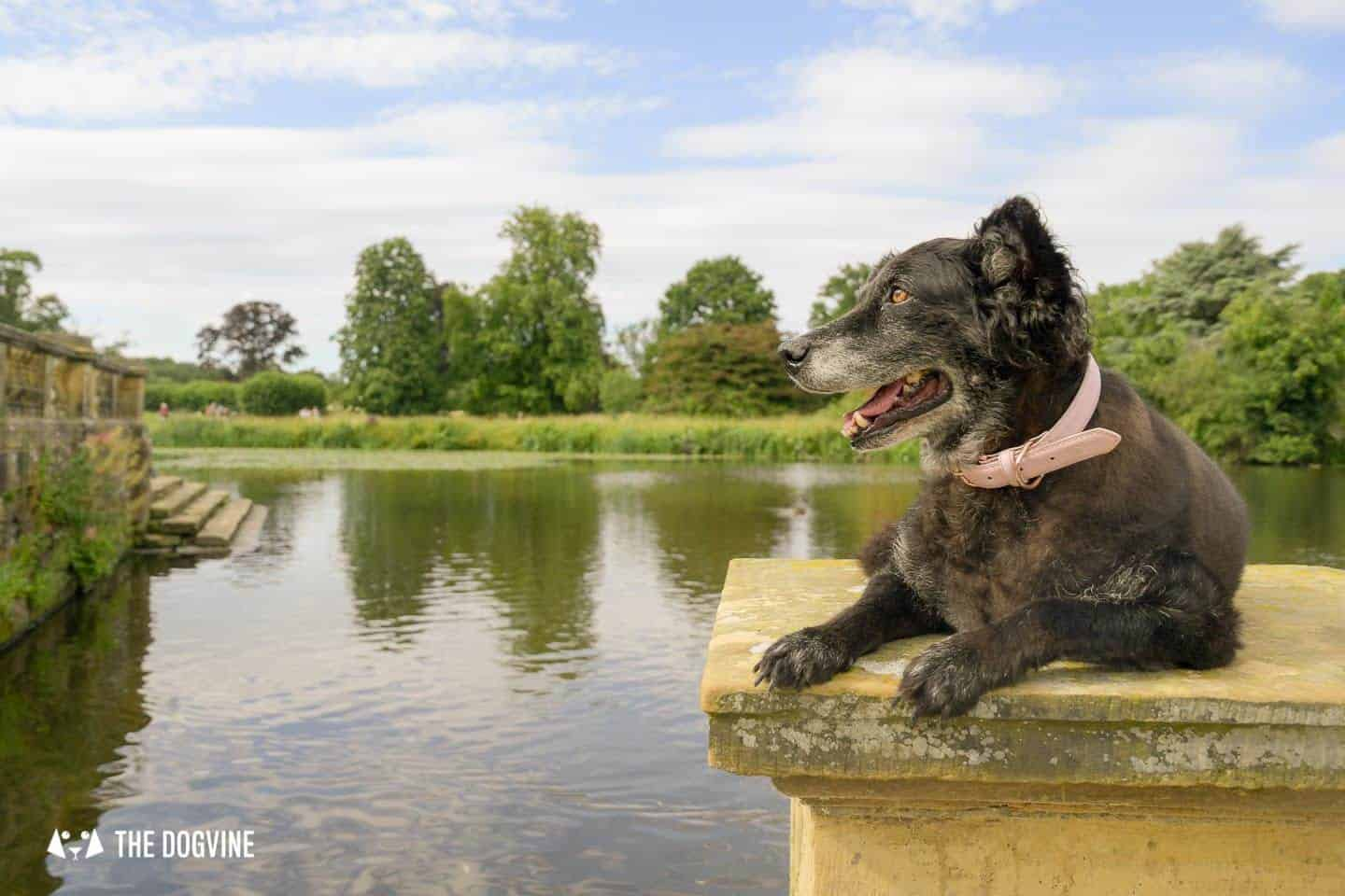 8 Reasons To Visit the Stunning Dog-friendly Hever Castle 19