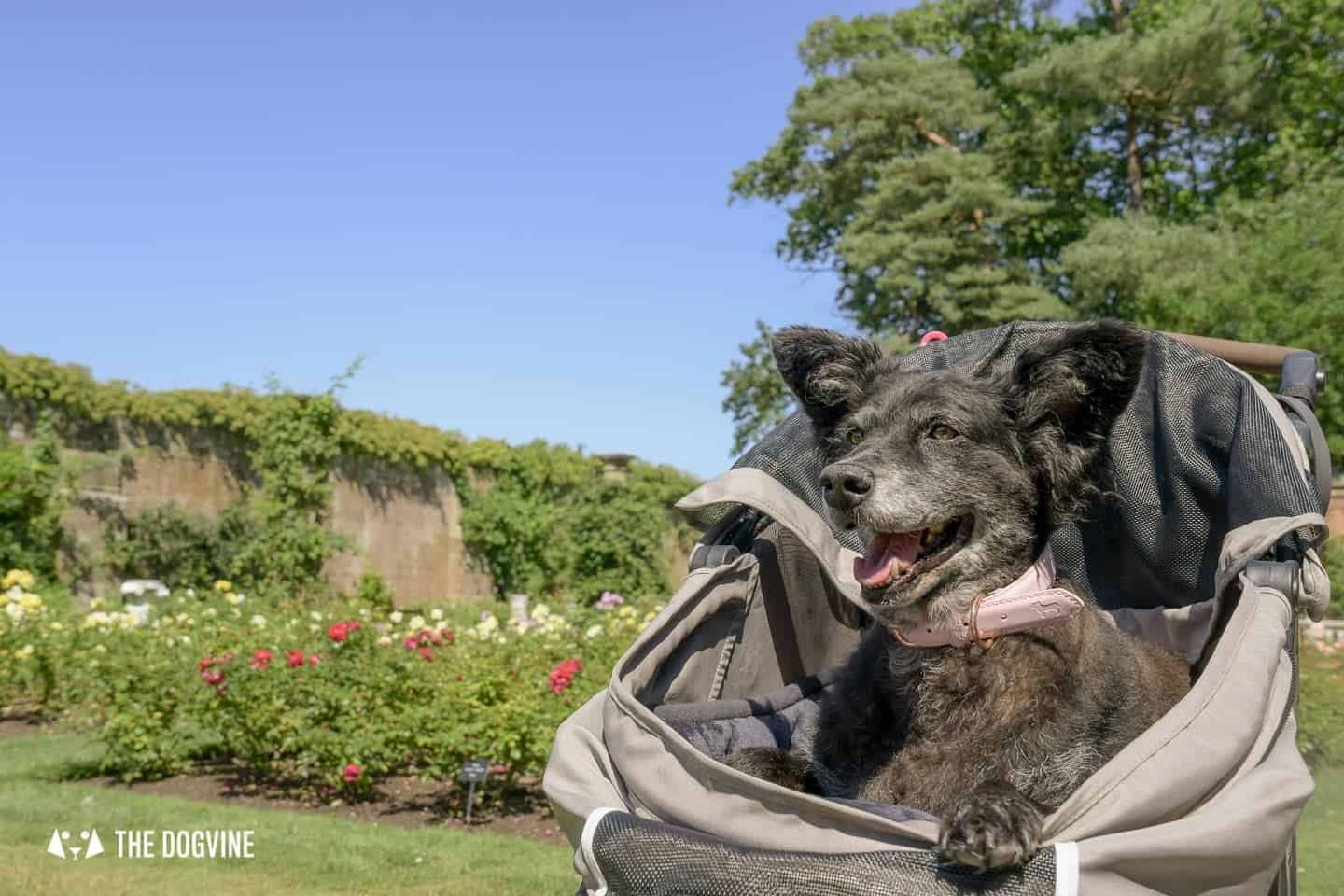 8 Reasons To Visit the Stunning Dog-friendly Hever Castle 38
