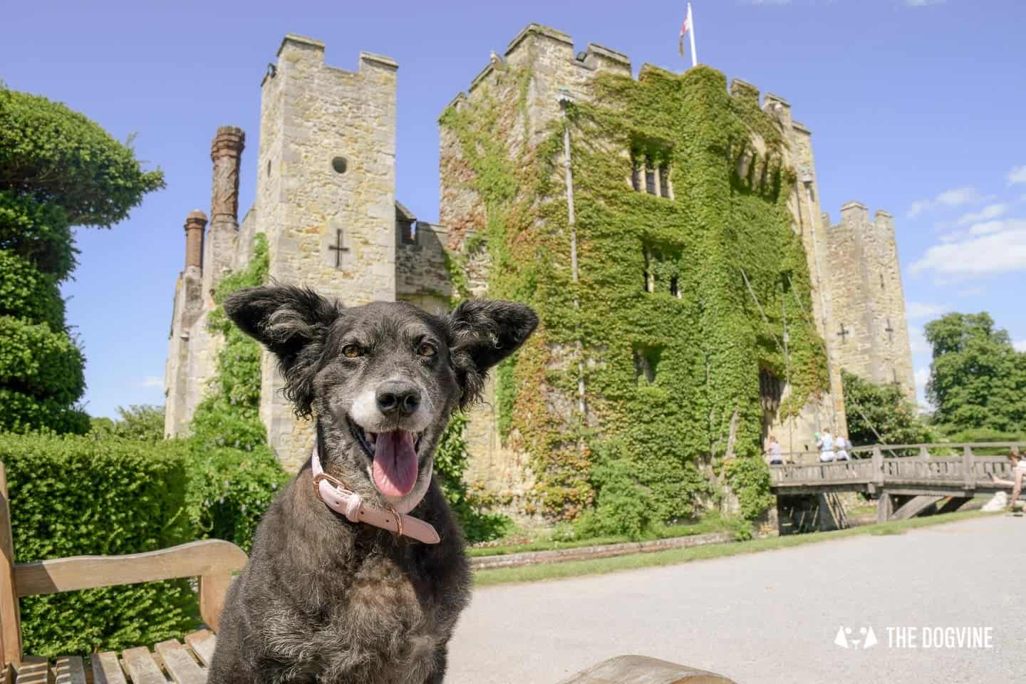8 Reasons To Visit the Stunning Dog-friendly Hever Castle 5