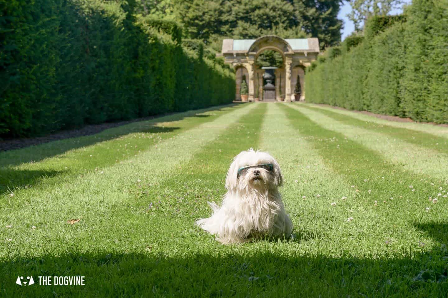 8 Reasons To Visit the Stunning Dog-friendly Hever Castle 8