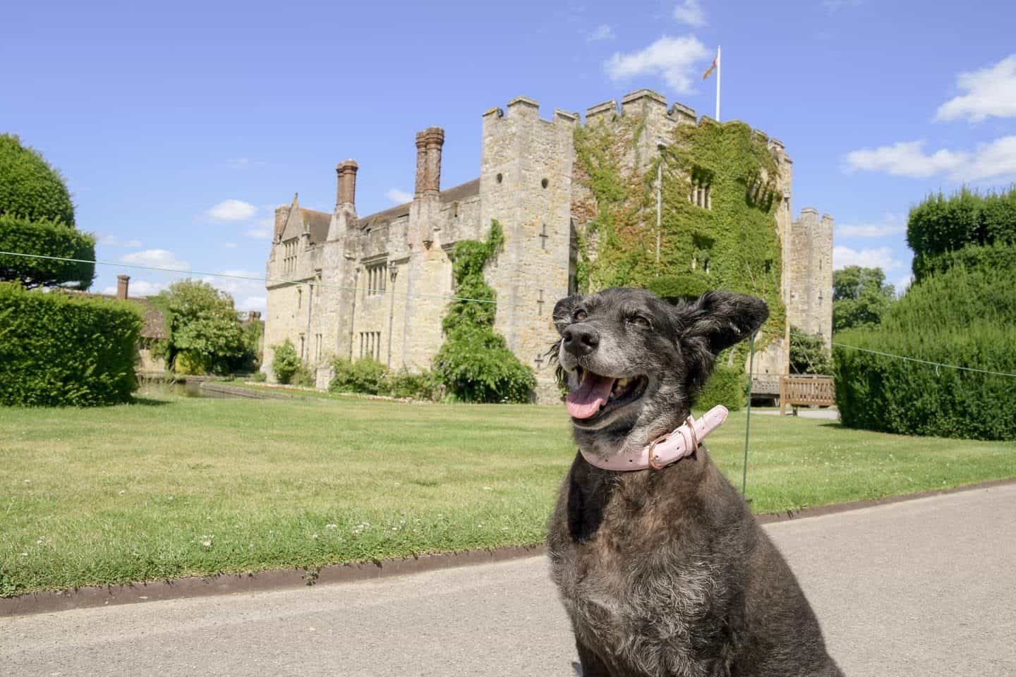 8 Reasons To Visit the Stunning Dog-friendly Hever Castle