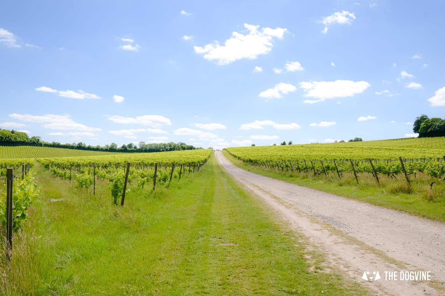 Denbies Dog-friendly Vineyard | A Delightful Day Out 1