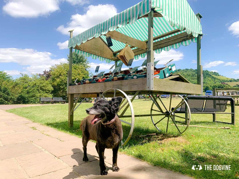 Denbies Dog-friendly Vineyard | A Delightful Day Out 15