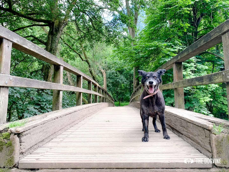 Denbies Dog-friendly Vineyard | A Delightful Day Out 18