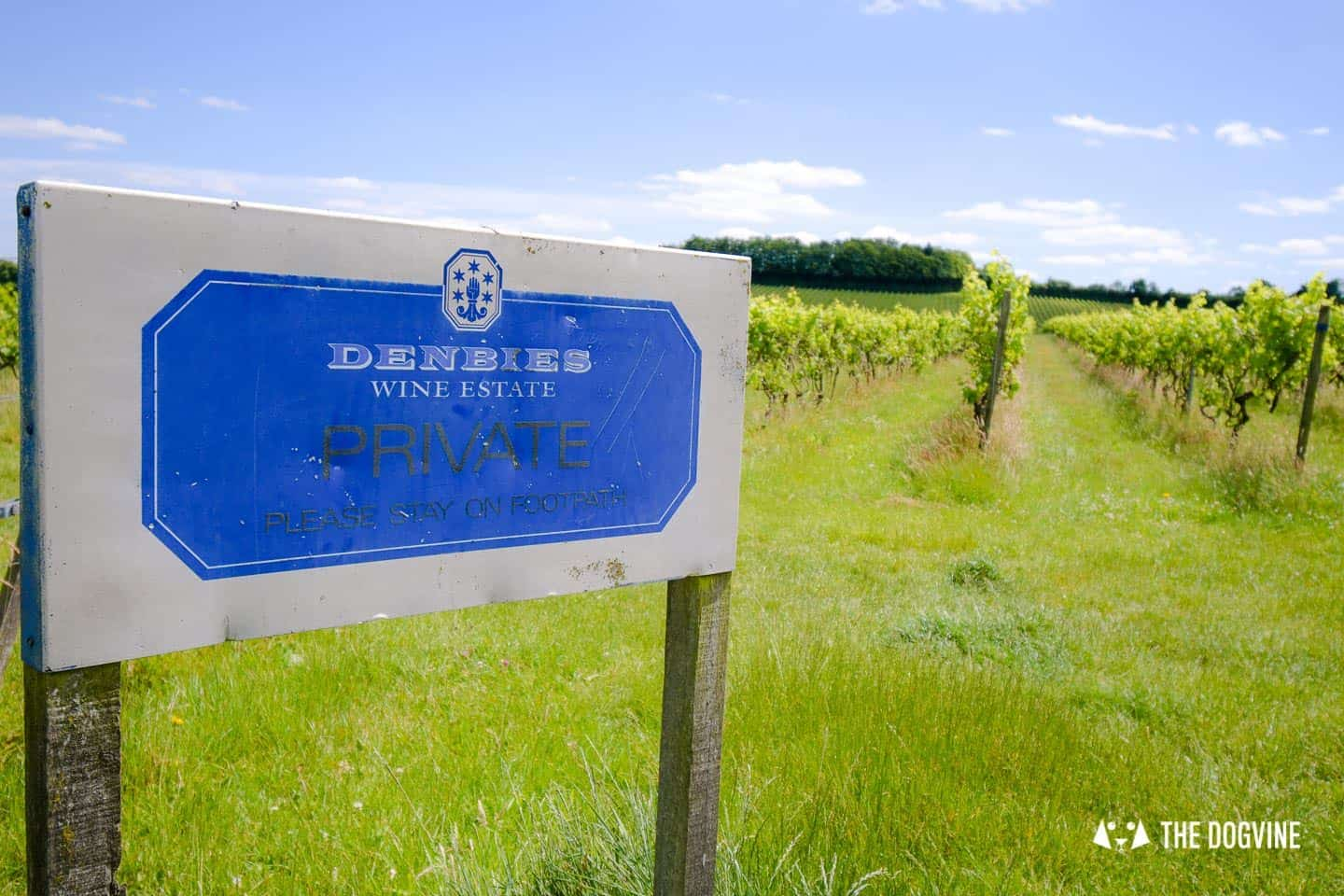 Denbies Dog-friendly Vineyard | A Delightful Day Out 2