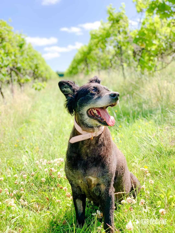Denbies Dog-friendly Vineyard | A Delightful Day Out 27