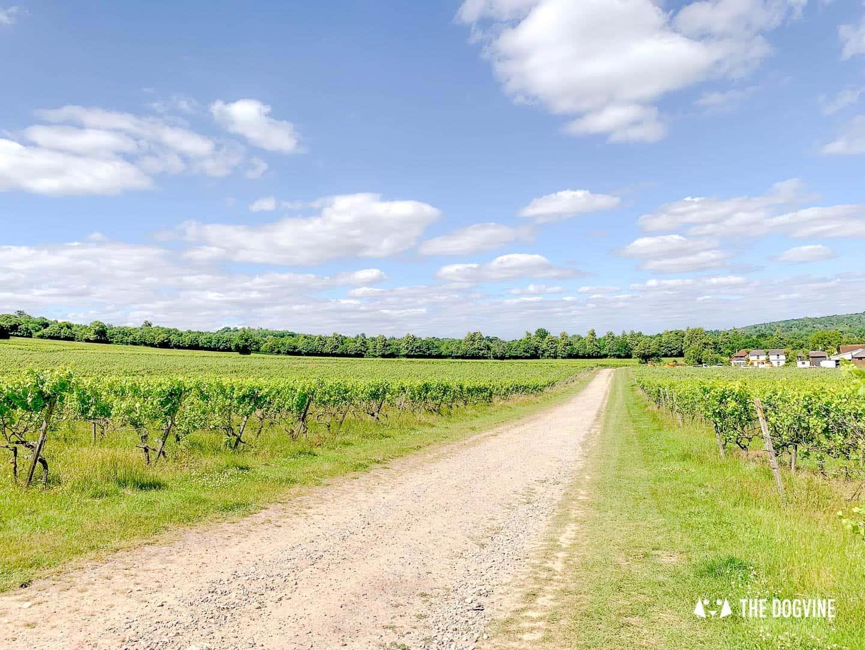 Denbies Dog-friendly Vineyard | A Delightful Day Out 32