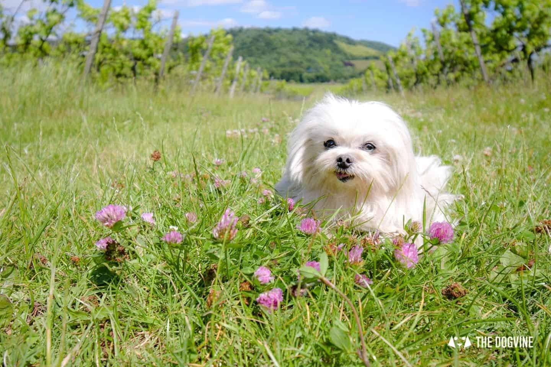 Denbies Dog-friendly Vineyard | A Delightful Day Out 5