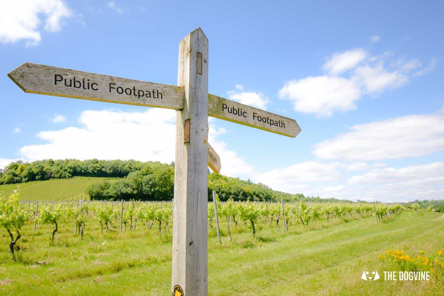 Denbies Dog-friendly Vineyard | A Delightful Day Out 6