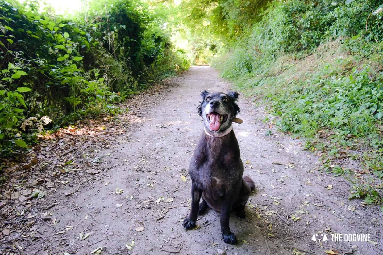 Denbies Dog-friendly Vineyard | A Delightful Day Out 9