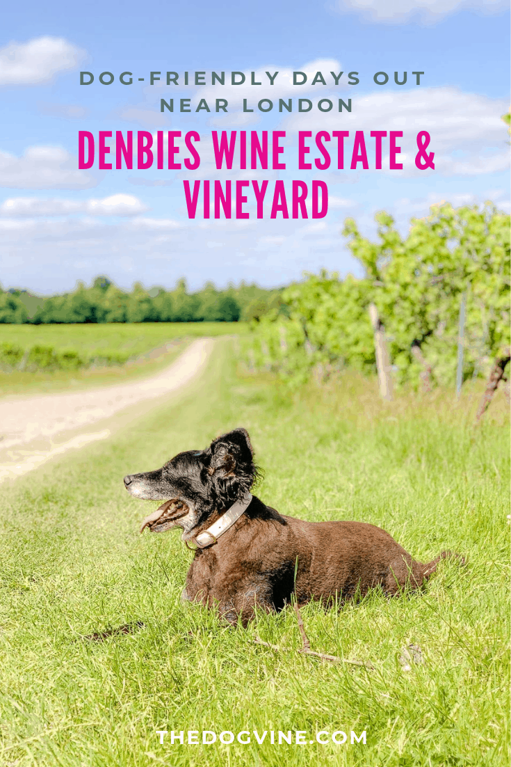 Denbies Dog-friendly Vineyard _ A Delightful Dog Day Out - Belinha