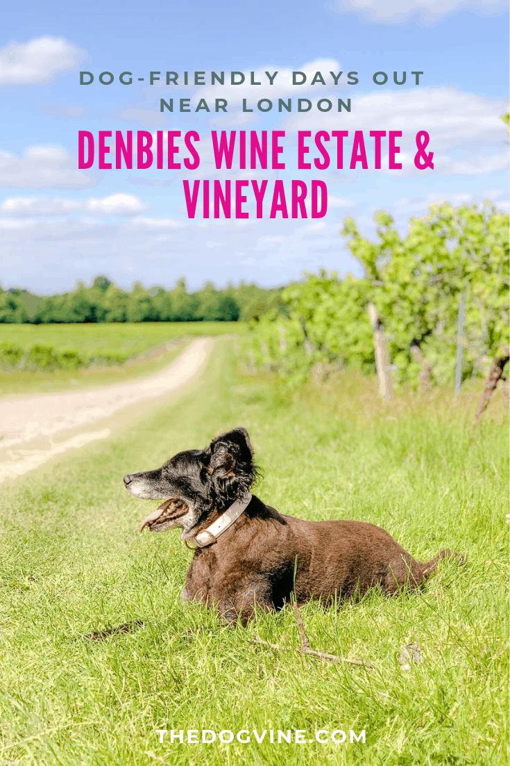 Denbies Dog-friendly Vineyard _ A Delightful Dog Day Out - Belinha