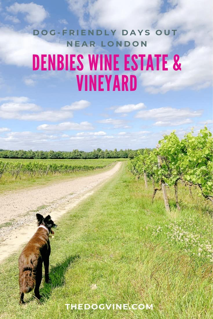 Denbies Dog-friendly Vineyard _ A Delightful Dog Day Out