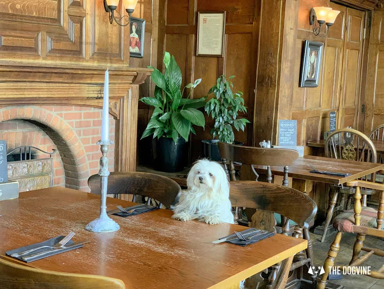 Dog-friendly King Henry VIII Pub Hever 2