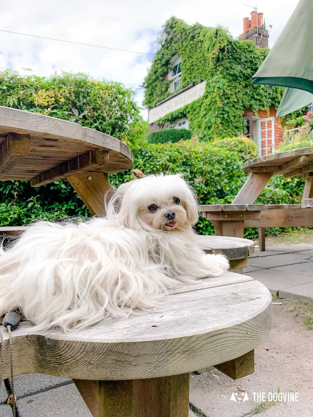 Dog-friendly King WIlliam IV Pub Mickleham 4